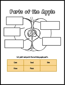 Parts of the Apple